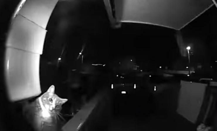 Il gatto suona il campanello (Foto video)