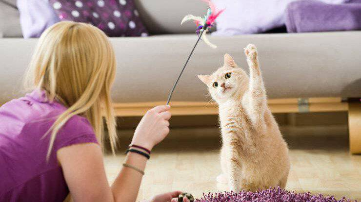 giochi col gatto