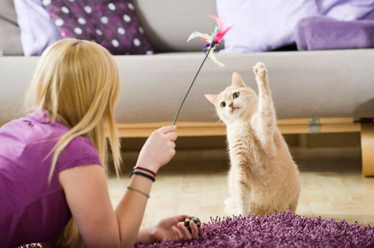 giochi del gatto