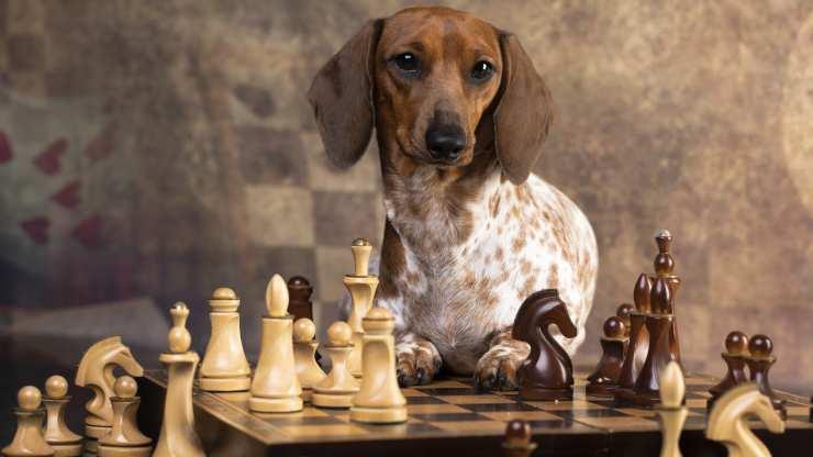 giochi intelligenza cani
