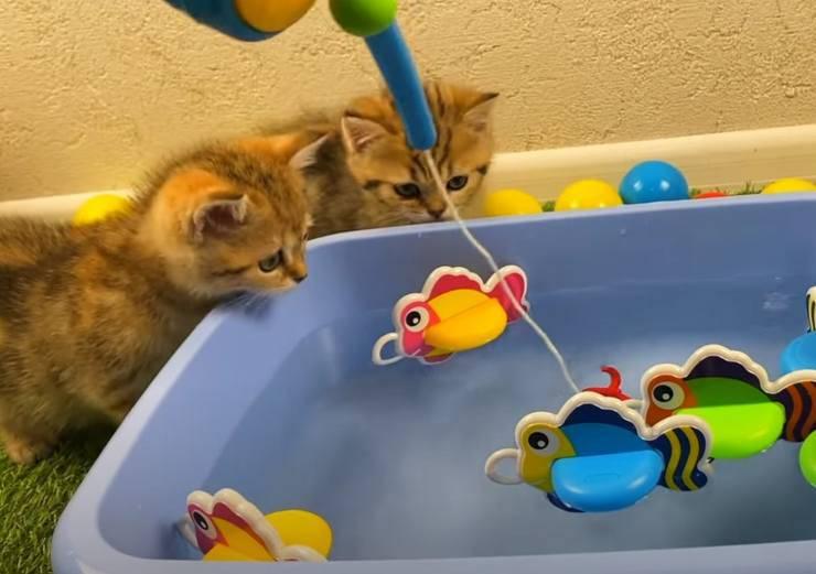 gattini gioco pescatori