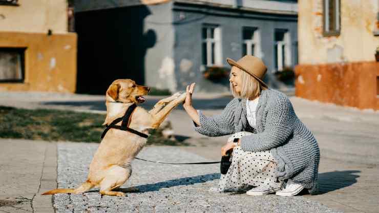 Un cane pieno di gioia (Foto Pixabay)