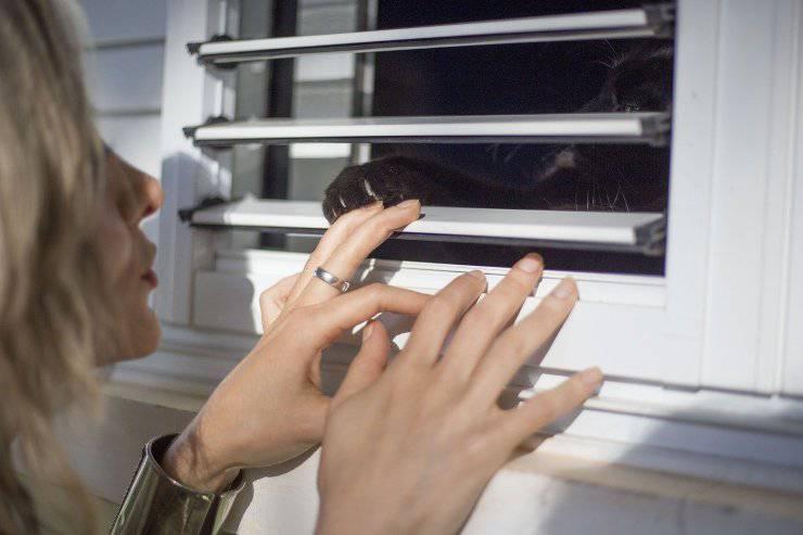 Zampa del gatto dalla finestra