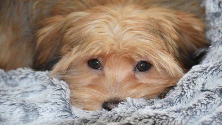 Il cane fa gli occhi dolci