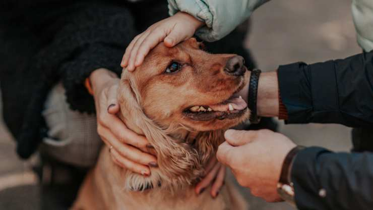 i cani alzano la testa quando li accarezzi