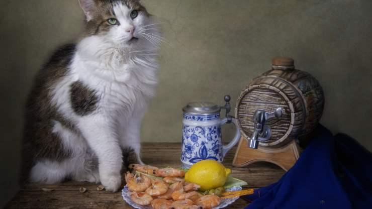 i gatti possono mangiare i gamberetti