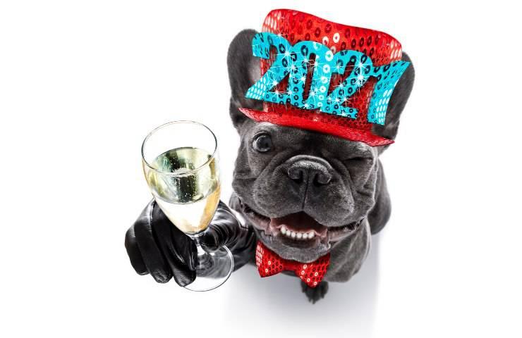 il cane può bere spumante