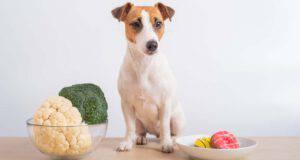 il cane può mangiare il cavolfiore