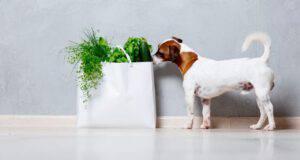 il cane può mangiare il sedano