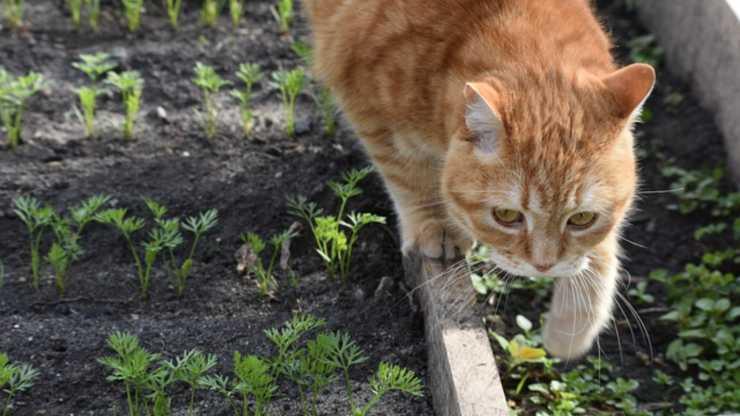 il gatto può mangiare il sedano