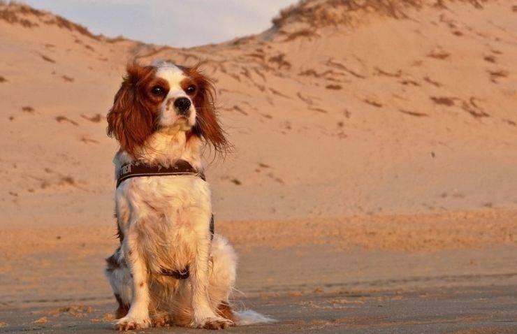 cagnolina 65 giorni deserto