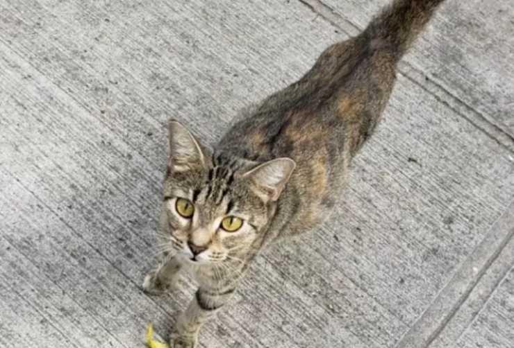 gattina randagia incinta strada