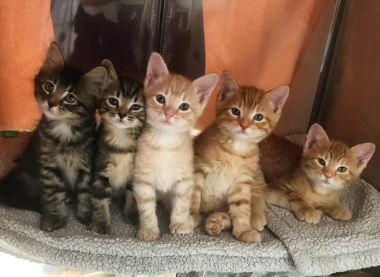 gattina incinta strada aiuto