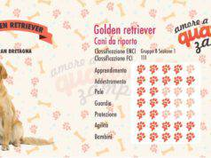 infografica golden retriever