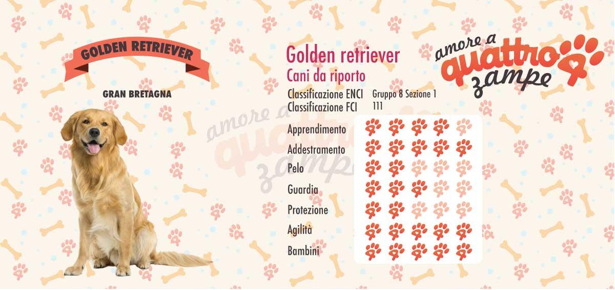 infografica golden retriever