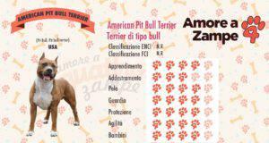 infografica american pitbull pit bull terrier