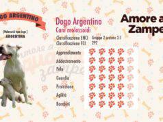 infografica cane dogo argentino