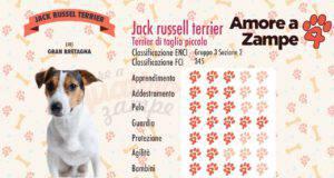 infografica Jack Russell scheda razza