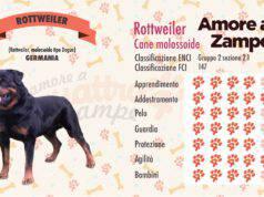 infografica cane rottweiler