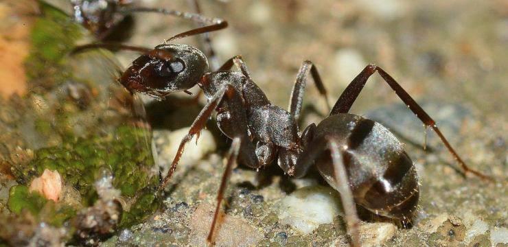 Il gatto mangia le formiche