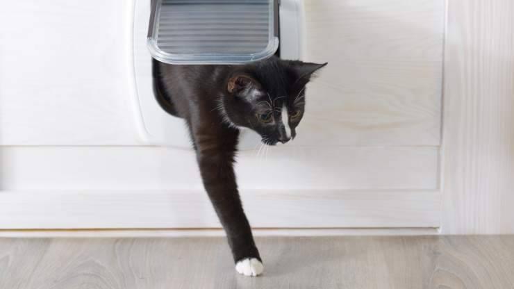 insegnare al gatto ad usare la gattaiola