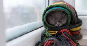 ipotermia nel gatto