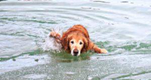 cane uomo acqua ghiacciata
