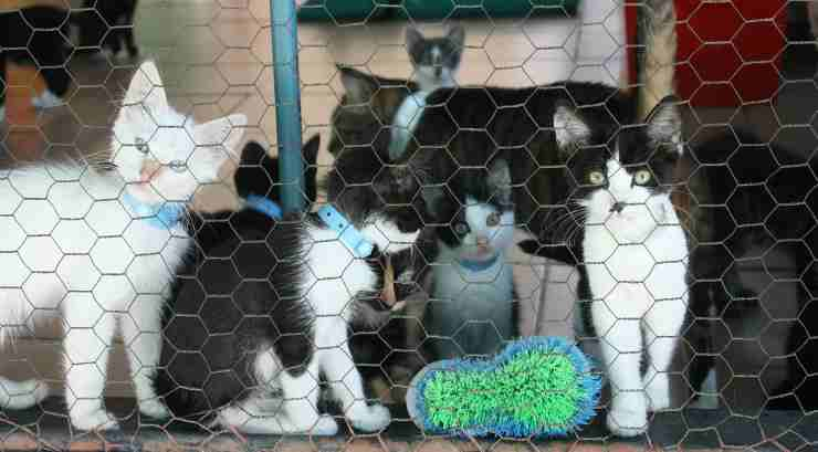 Gatti nel gattile (foto pixabay)