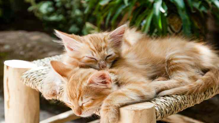 Gatti che fanno tenerezza (foto pixabay)