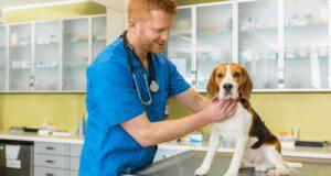 malattie comuni beagle