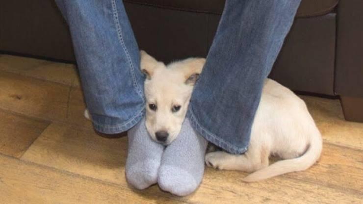 cane siede o si appoggia sui piedi