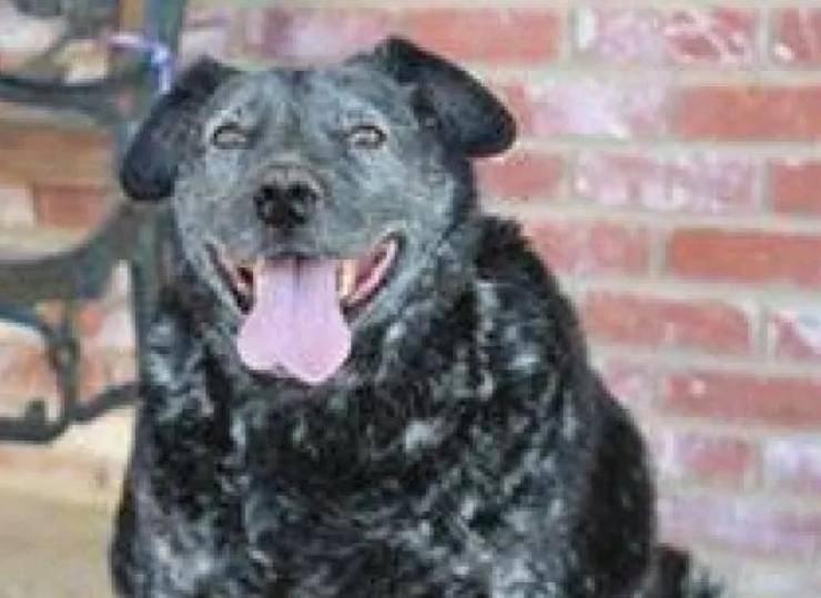 cane aspetta mesi proprietario morto