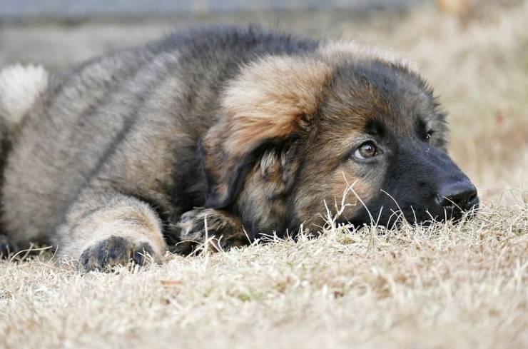 cane sapetta mesi proprietario morto