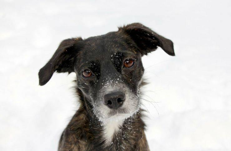 cane neve prima volta