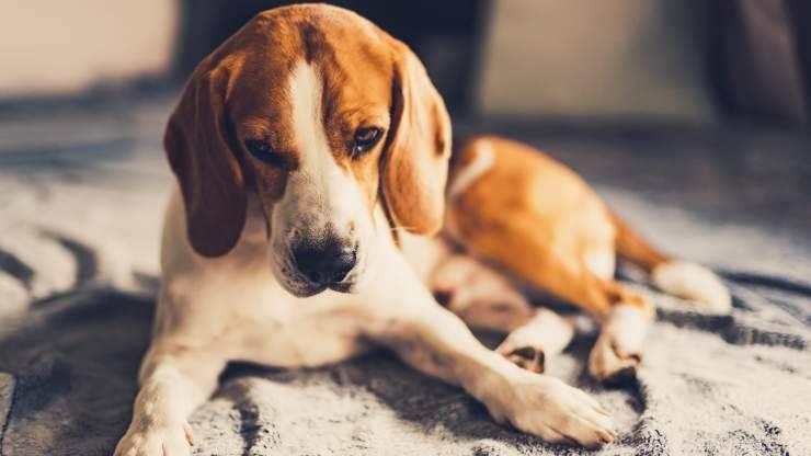 osteogenesi nel cane