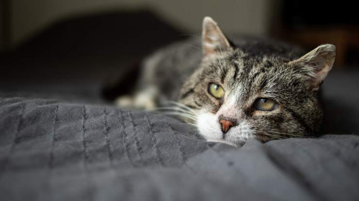 osteogenesi nel gatto