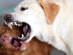 donna salva cane attacco cucciolo