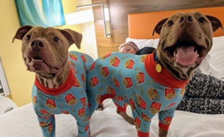 pigiama party casa cani abbandonati