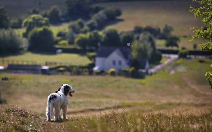 Cucciolo solo in campagna (Foto Pixabay)