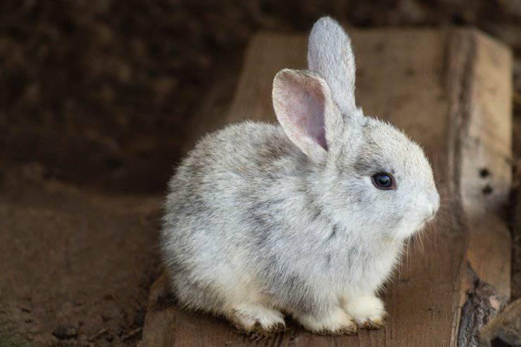 muta coniglio perde pelo perdita peli