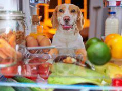razze di cani che amano mangiare