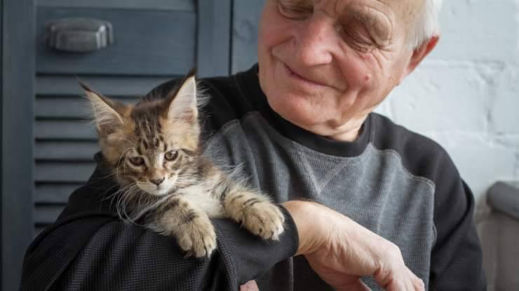razze di gatti adatte agli anziani
