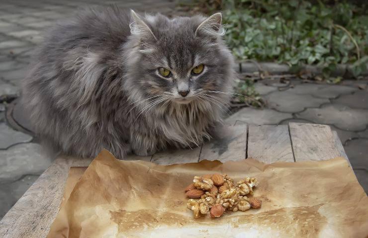 gatti con occhi a mandorla
