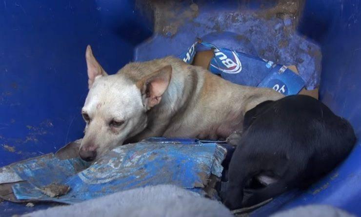 cagnolino salvato bidone spazzatura