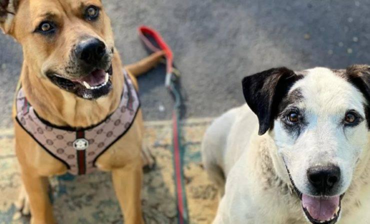 cane abbandonato bosco salvato amico speciale