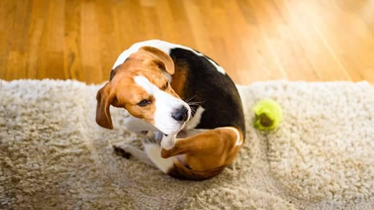 sintomi allergia alimentare cane