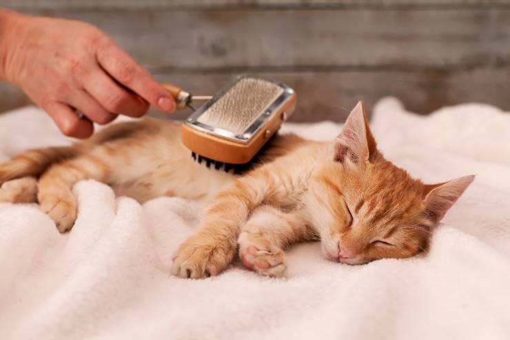 spazzole gatto