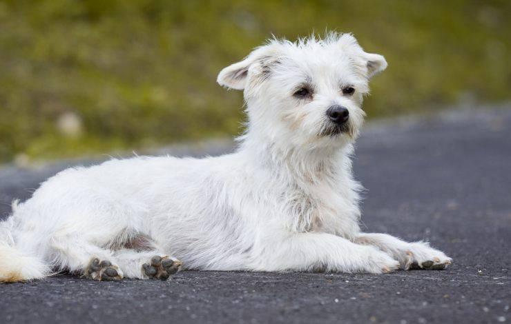 cane abbandonato strada infezione viso