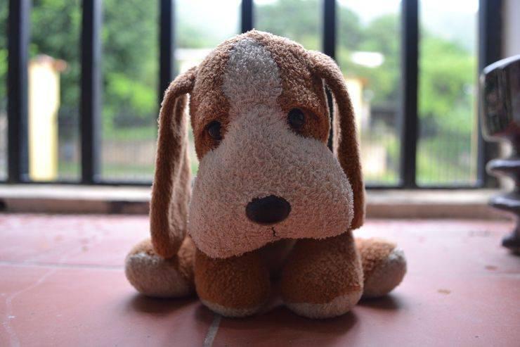 cane lecca muro video