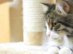 tiragraffi fai da te per gatti
